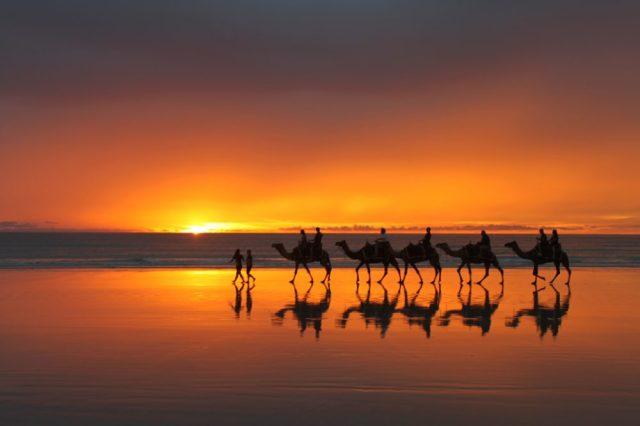Camel-Ride-gallery-2